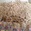 Kinh hãi 5.000 ong bắp cày làm tổ trên giường