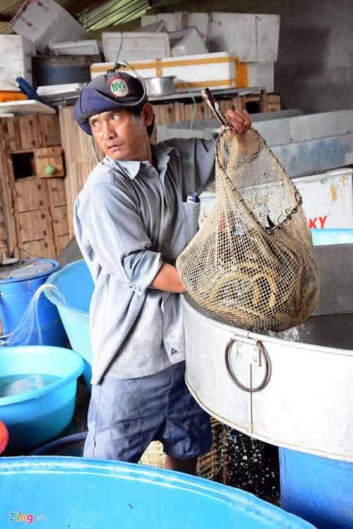 Kiếm 300 triệu/tháng nhờ nuôi lươn không bùn ở Sài Gòn - 10