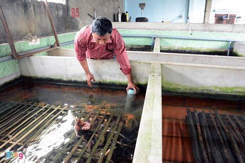 Kiếm 300 triệu/tháng nhờ nuôi lươn không bùn ở Sài Gòn - 12
