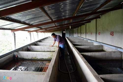 Kiếm 300 triệu/tháng nhờ nuôi lươn không bùn ở Sài Gòn - 3