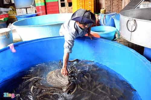 Kiếm 300 triệu/tháng nhờ nuôi lươn không bùn ở Sài Gòn - 9