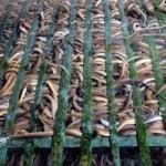 Thị trường - Tiêu dùng - Kiếm 300 triệu/tháng nhờ nuôi lươn không bùn ở Sài Gòn