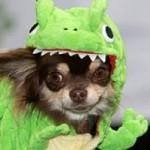 Phi thường - kỳ quặc - Lễ hội thời trang dành riêng chó cún cưng