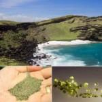 Du lịch - Bãi biển cát xanh lạ kỳ ở Hawaii