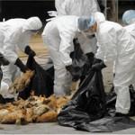 Lo ngại virus cúm A/H7N9, Việt Nam nâng mức cảnh báo