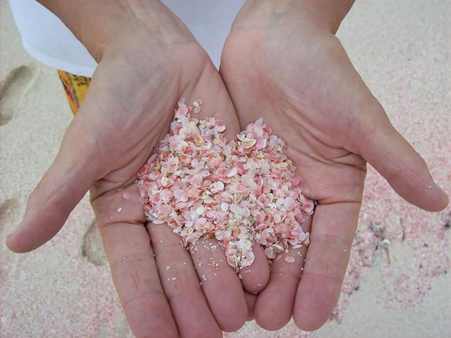 Sở dĩ bãi biển có màu sắc lạ kỳ này là do tàn dư của san hô được sóng biển xô vào bờ.