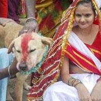 Video: Cô gái Ấn Độ kết hôn với... chó