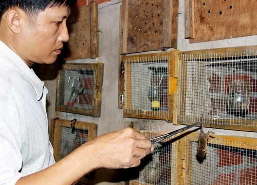 Lò nuôi rắn doanh thu hơn 1 tỷ đồng/năm ở miền Tây - 2