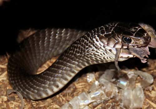 Lò nuôi rắn doanh thu hơn 1 tỷ đồng/năm ở miền Tây - 3