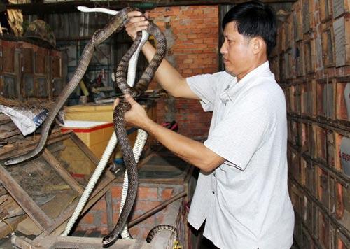 Lò nuôi rắn doanh thu hơn 1 tỷ đồng/năm ở miền Tây - 5