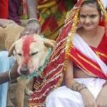 Phi thường - kỳ quặc - Video: Cô gái Ấn Độ kết hôn với... chó