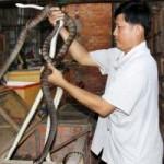 Thị trường - Tiêu dùng - Lò nuôi rắn doanh thu hơn 1 tỷ đồng/năm ở miền Tây