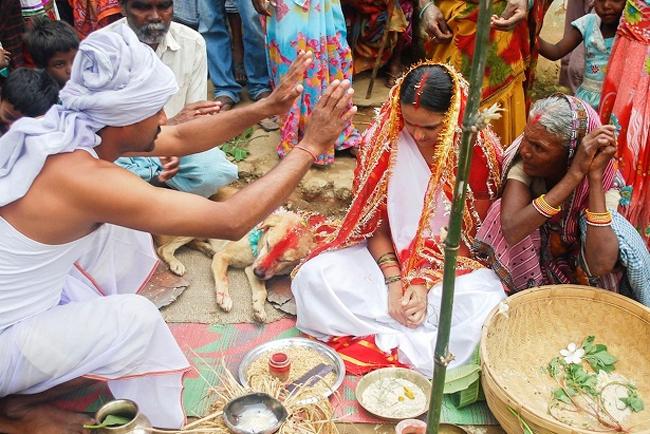 Theo bộ tộc nơi đây, nghi lễ kết hôn này sẽ giúp dân làng trừ tà và thoát khỏi lời nguyền của ma quỷ. Già làng đã nhanh chóng tổ chức đám cưới cho Mangli Munda và chú chó vừa trường thành - Sheru tại ngôi làng hẻo lánh ở bang Jharkhand. Họ xem đây là điềm may mắn cho cộng đồng của mình.