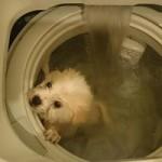 Tin tức trong ngày - Hồng Kông: Bất bình vì chú chó bị quay trong máy giặt