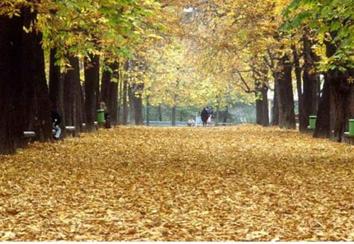 Ngắm mùa thu nhuộm vàng thế giới - 10