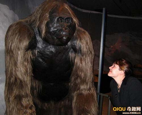 10 con quái vật tiền sử khổng lồ nhất - 1