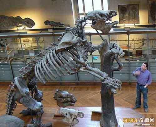 10 con quái vật tiền sử khổng lồ nhất - 10