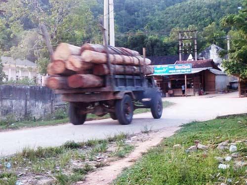 Hà Tĩnh: Gỗ lậu theo công nông ào ạt đổ về xuôi - 1