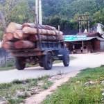 Thị trường - Tiêu dùng - Hà Tĩnh: Gỗ lậu theo công nông ào ạt đổ về xuôi