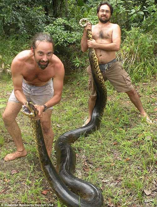 Thầy giáo dạy Toán bắt được con trăn dài hơn 5m - 2