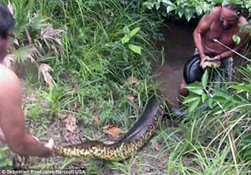 Thầy giáo dạy Toán bắt được con trăn dài hơn 5m - 3