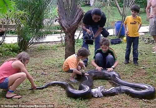Thầy giáo dạy Toán bắt được con trăn dài hơn 5m - 10
