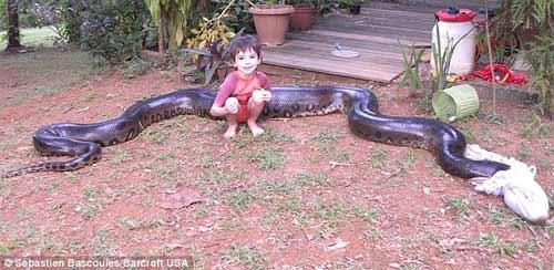Thầy giáo dạy Toán bắt được con trăn dài hơn 5m - 6