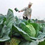 Cẩm nang tìm việc - Cử nhân về quê làm nông dân