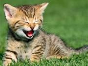 """Bạn trẻ - Cuộc sống - Việt kiều thịt mèo hàng xóm vì nhớ """"hương vị quê hương"""""""