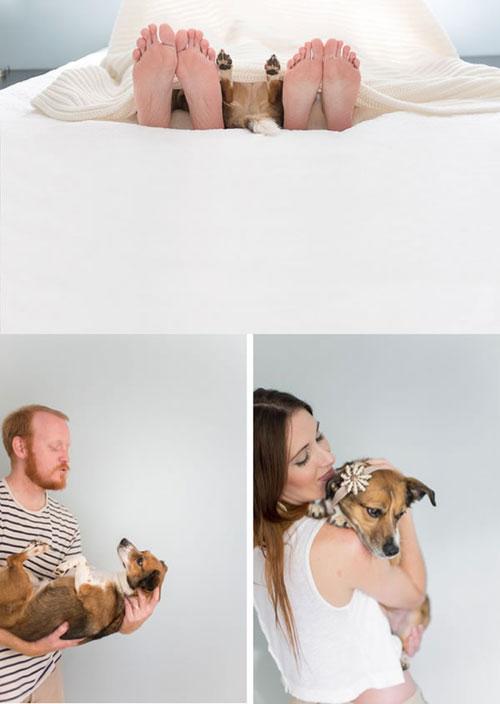 Cảm động với chùm ảnh những chú chó đặc biệt - 4