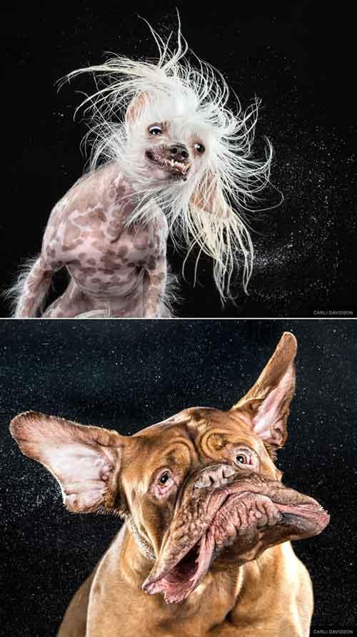 Cảm động với chùm ảnh những chú chó đặc biệt - 6