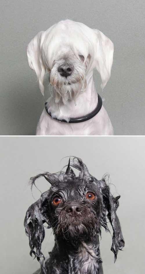 Cảm động với chùm ảnh những chú chó đặc biệt - 7