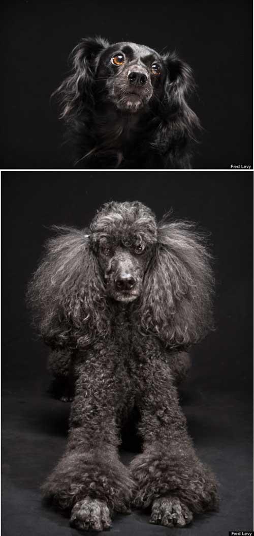 Cảm động với chùm ảnh những chú chó đặc biệt - 9