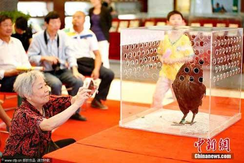 Cuộc thi sắc đẹp dành cho... gà - 2