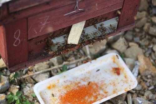 Nuôi ong nguy hiểm, thu tiền tỷ mỗi mùa ở Mộc Châu - 5