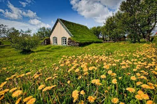 Nhà thờ mái cỏ đẹp như trong cổ tích ở Iceland - 2