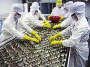 Thị trường - Tiêu dùng - Mỹ áp thuế 32 doanh nghiệp xuất khẩu tôm
