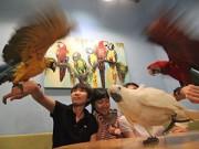 Bạn trẻ - Cuộc sống - Cà phê cùng vẹt và cú hút giới trẻ Sài Gòn