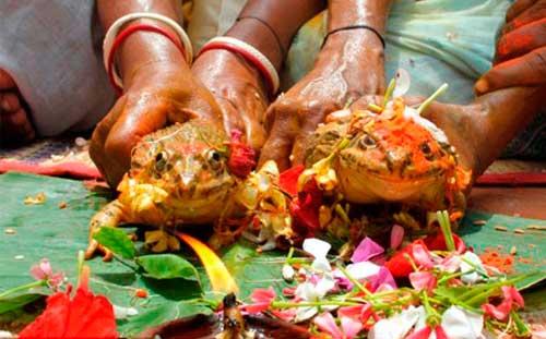 Hai bé gái 7 tuổi ở Ấn Độ kết hôn với... ếch - 1