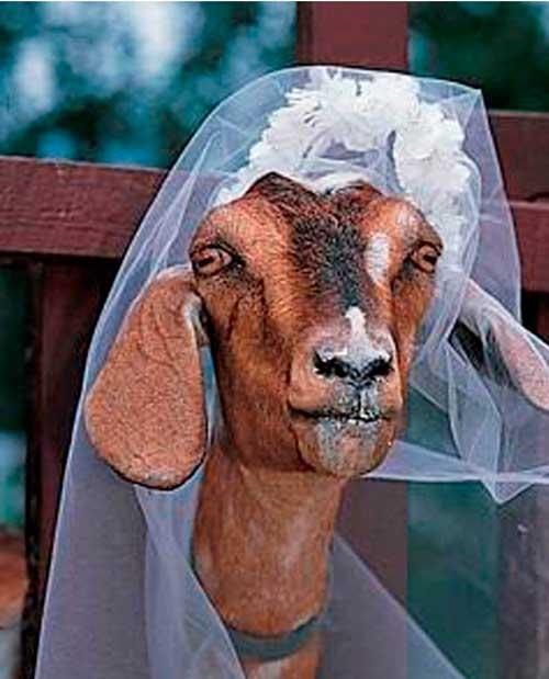 Hai bé gái 7 tuổi ở Ấn Độ kết hôn với... ếch - 2