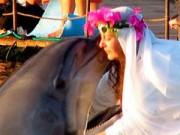 Phi thường - kỳ quặc - Nữ triệu phú kết hôn với... cá heo