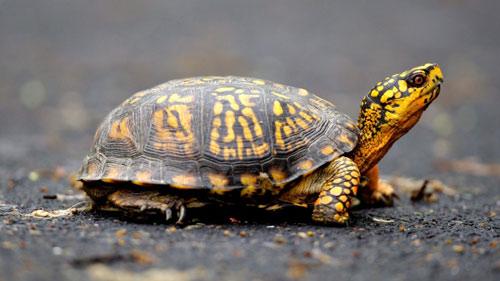 Mỹ: Giấu 51 con rùa quý trong đũng quần để vượt biên - 2