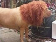 Phi thường - kỳ quặc - Sửng sốt với con vật mình chó, đầu sư tử