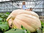 Chiêm ngưỡng quả bí ngô khổng lồ nặng 720kg