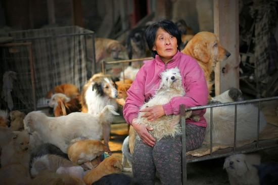 Cảm phục người phụ nữ chi nghìn đô để cứu 100 chú chó - 3