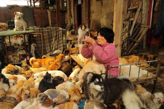 Cảm phục người phụ nữ chi nghìn đô để cứu 100 chú chó - 2
