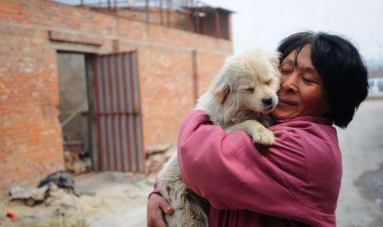 Cảm phục người phụ nữ chi nghìn đô để cứu 100 chú chó - 5