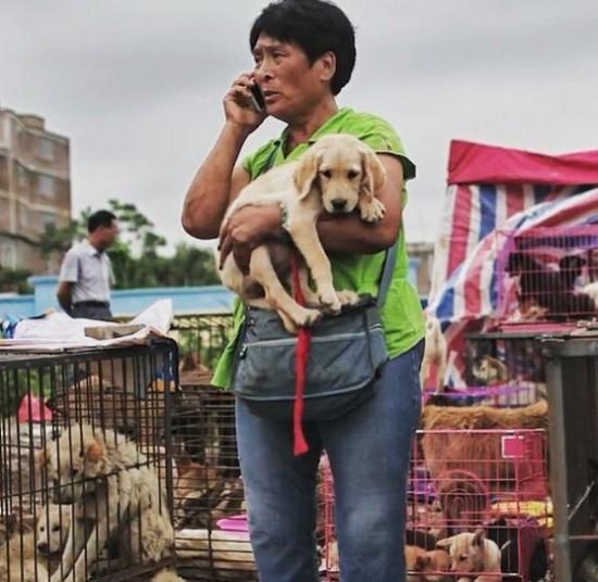 Cảm phục người phụ nữ chi nghìn đô để cứu 100 chú chó - 1