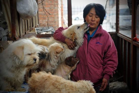 Cảm phục người phụ nữ chi nghìn đô để cứu 100 chú chó - 4