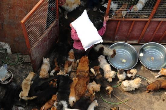 Cảm phục người phụ nữ chi nghìn đô để cứu 100 chú chó - 8